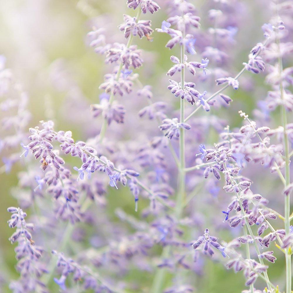 Ätherischeöle Lavendel Aromatherapie